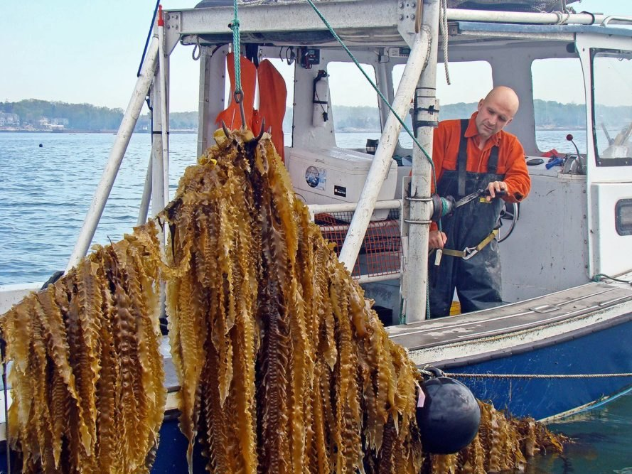 GREENWAVE 3D - FARMING THE OCEAN SUSTAINABLY
